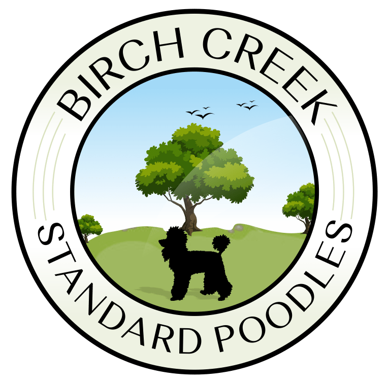 Birch Creek Standard Poodles