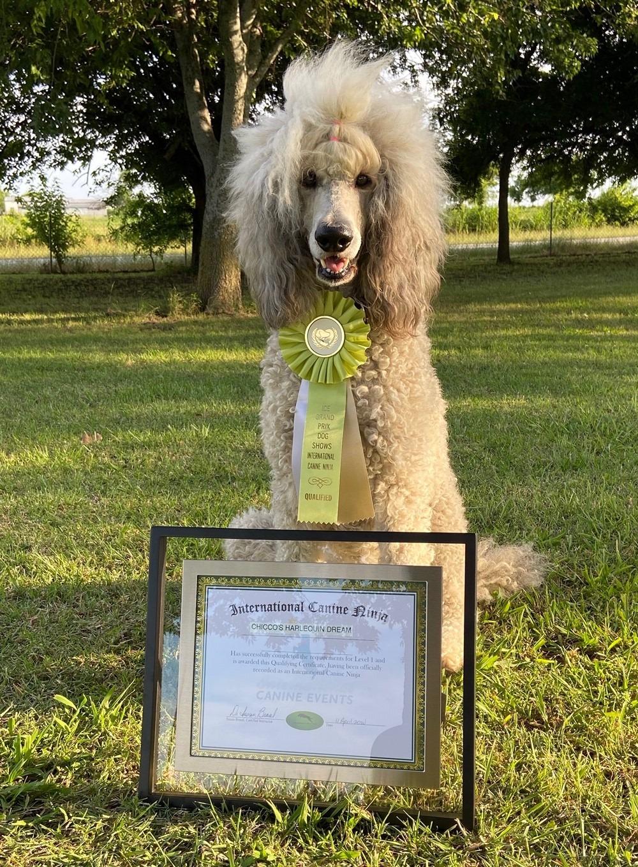 harley award